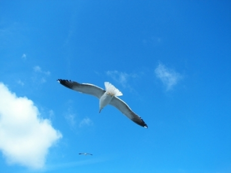 gallery/visualize-blue-sky-and-bird